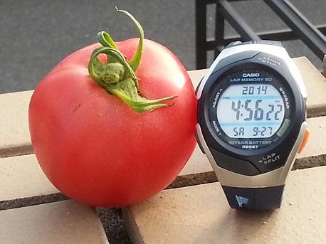 トマトのように赤く。.jpg